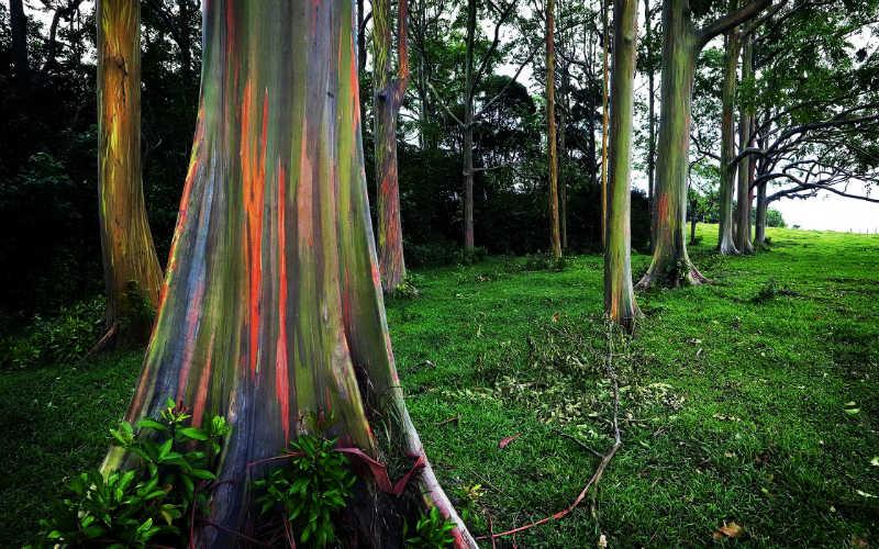 أجمل صور شجرة قوس قزح
