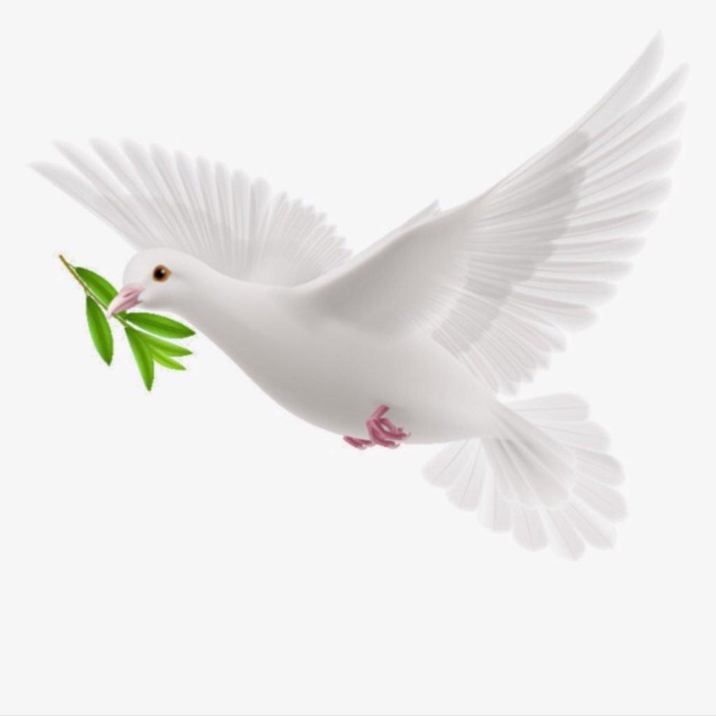 الحمامة رمز السلام