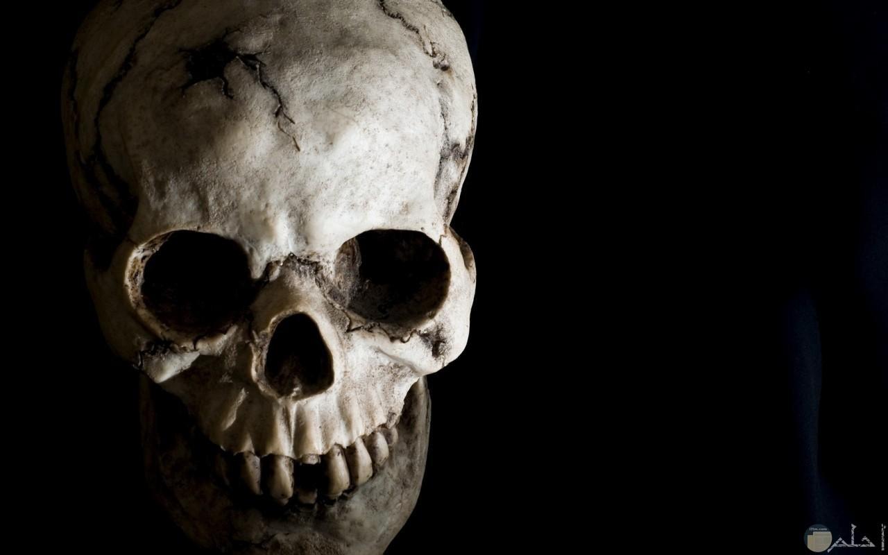 جمجمة مخيفة