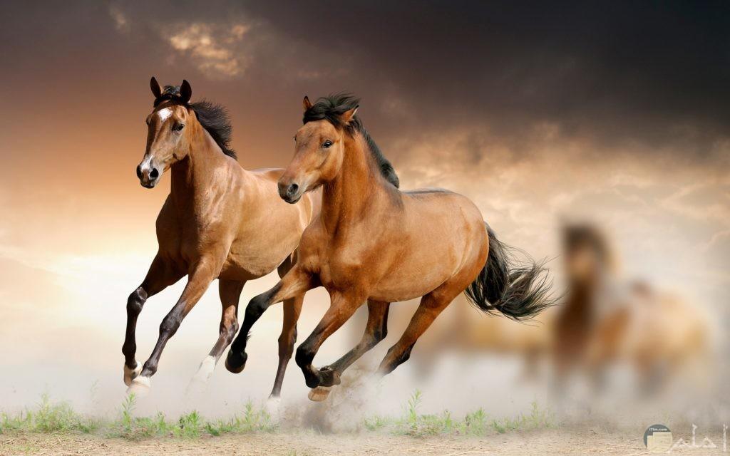 صور خيول جميلة