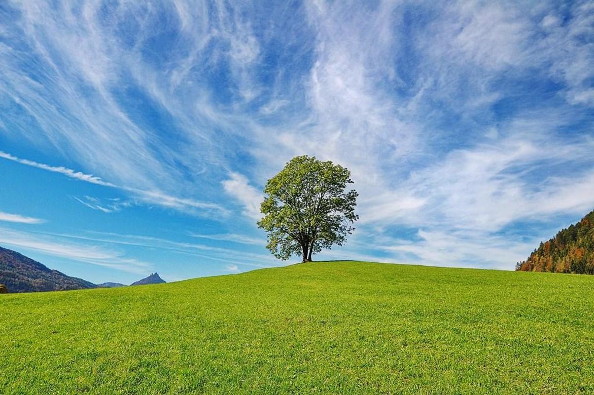 خلفية شجرة جميلة