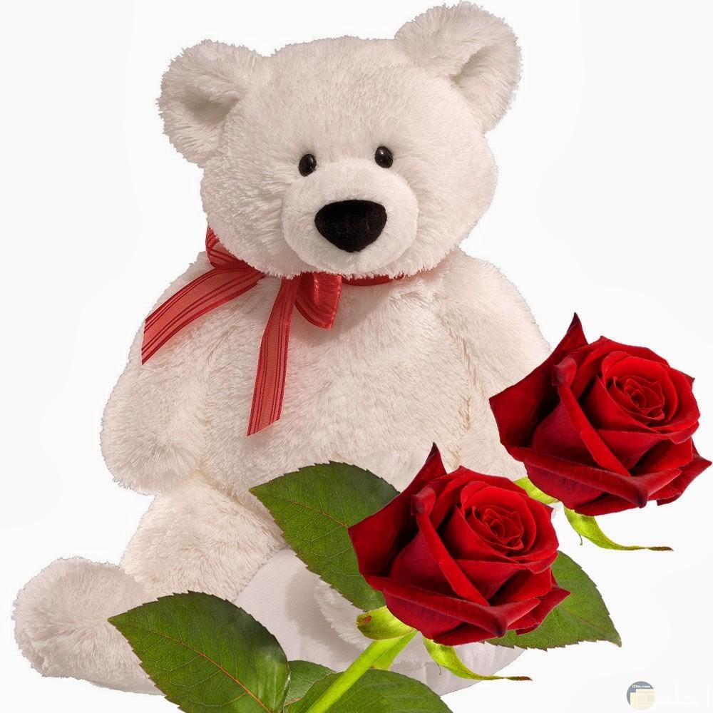 دبدوب هدية مع الورد الأحمر