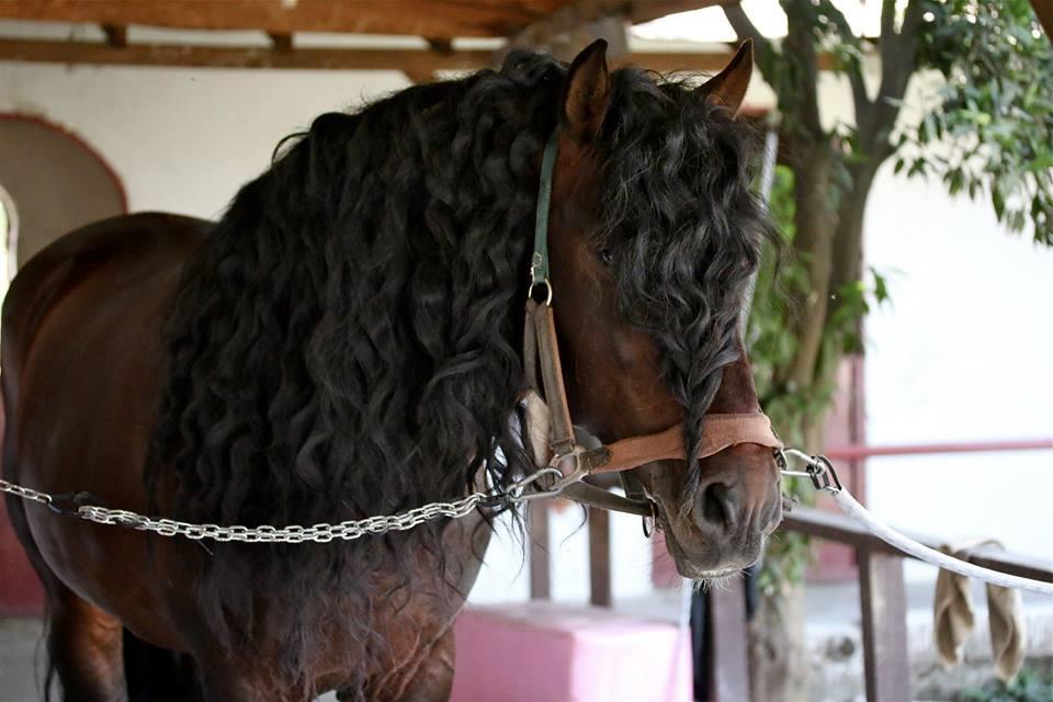 صورة حصان أسباني