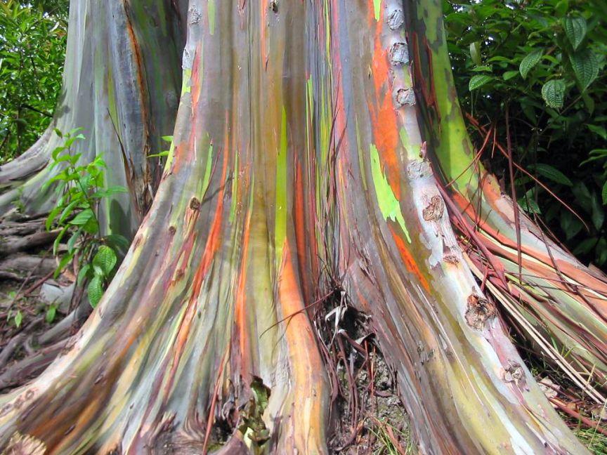 صورة شجرة قوس قزح