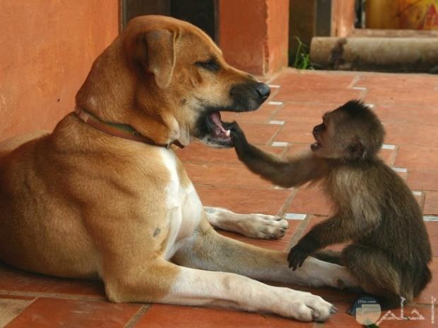 صورة قرد مع كلب كوميدية