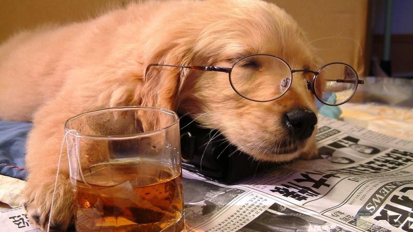 صورة كلب كوميدية