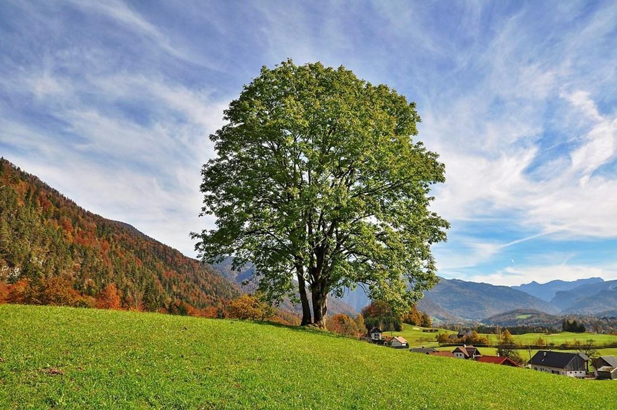 صورة لخلفية شجرة