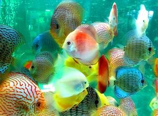 صور أسماك