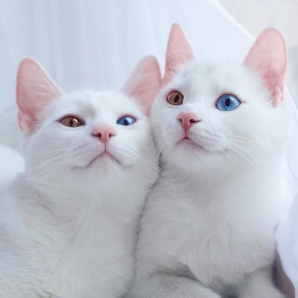 صور عيون قطط جميلة