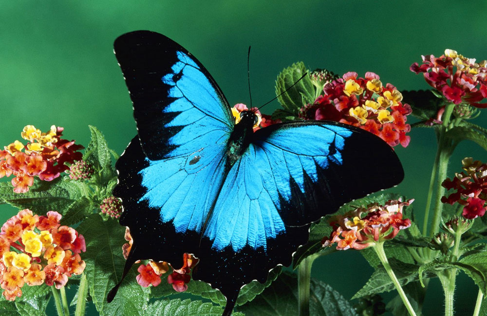 صور فراشة من جمال الطبيعة