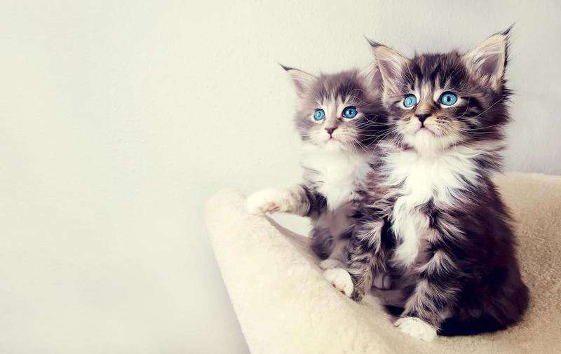 أجمل صور قطط بجودة عالية