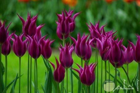 صور الطبيعة زهور