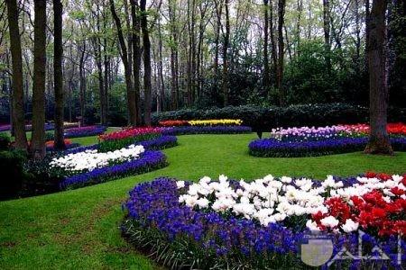 صور للطبيعة زهور