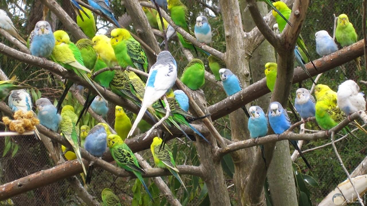 عصافير تغرد في الصباح