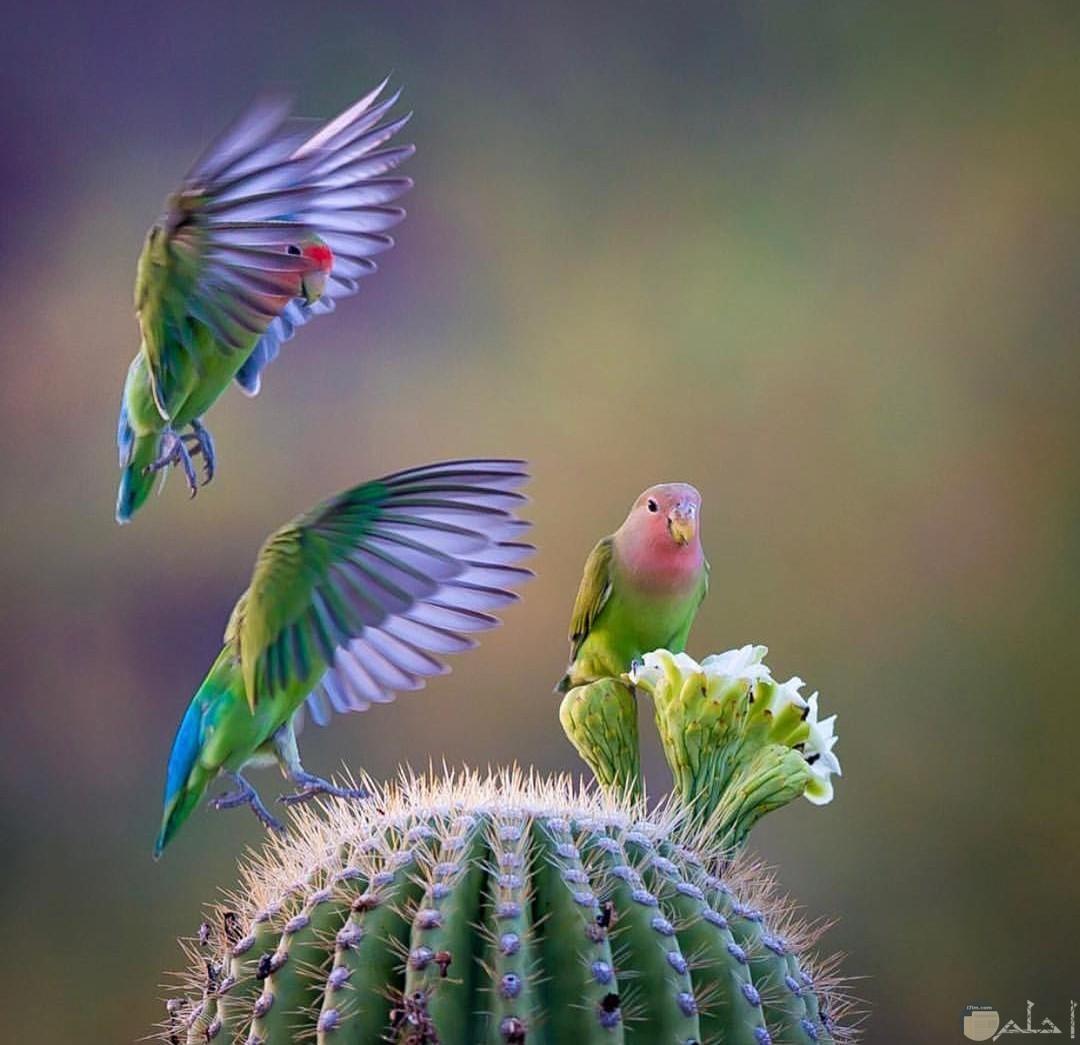 عصافير مميزة