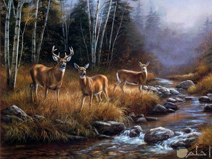 من أجمل اللوحات الطبيعية