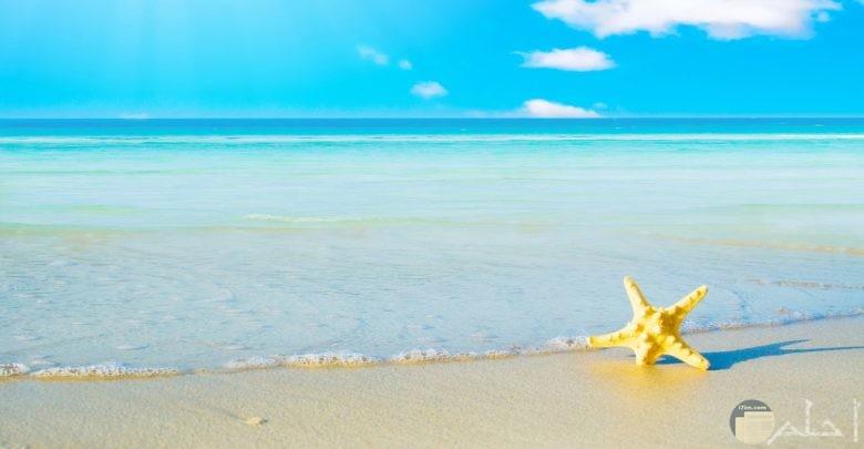 من أجمل صور البحر