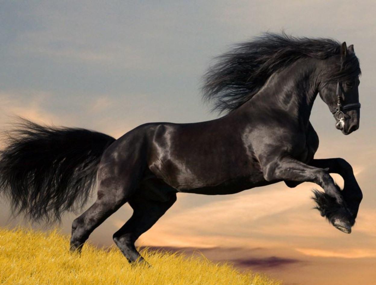 صورة حصان عربي