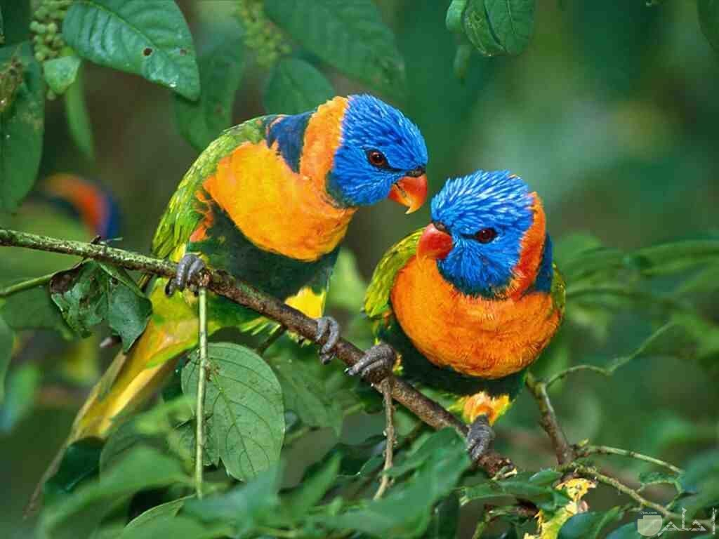 صور عصافير نادرة