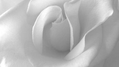 صورة بيضاء