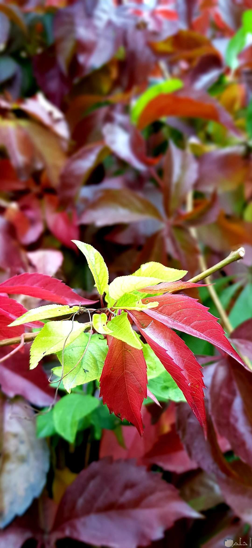 أجمل صور ملونة