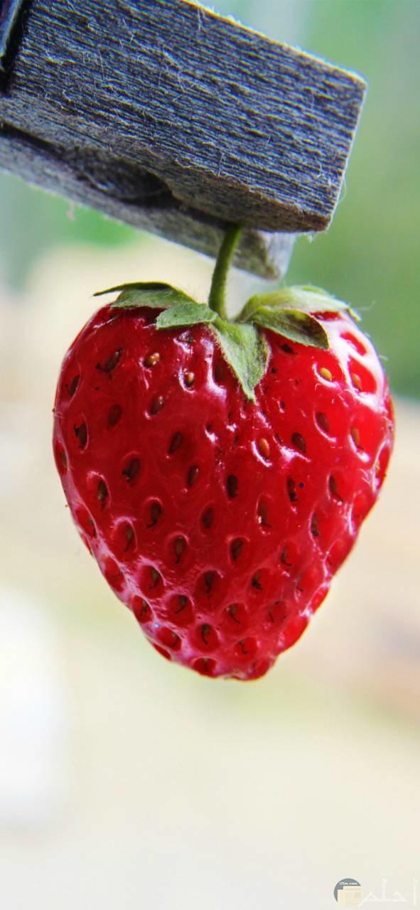 صور فراولة جميلة