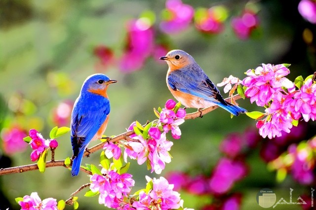 صور عصافير مدهشة