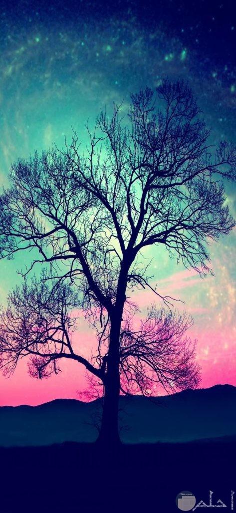 صور أشجار تحفه