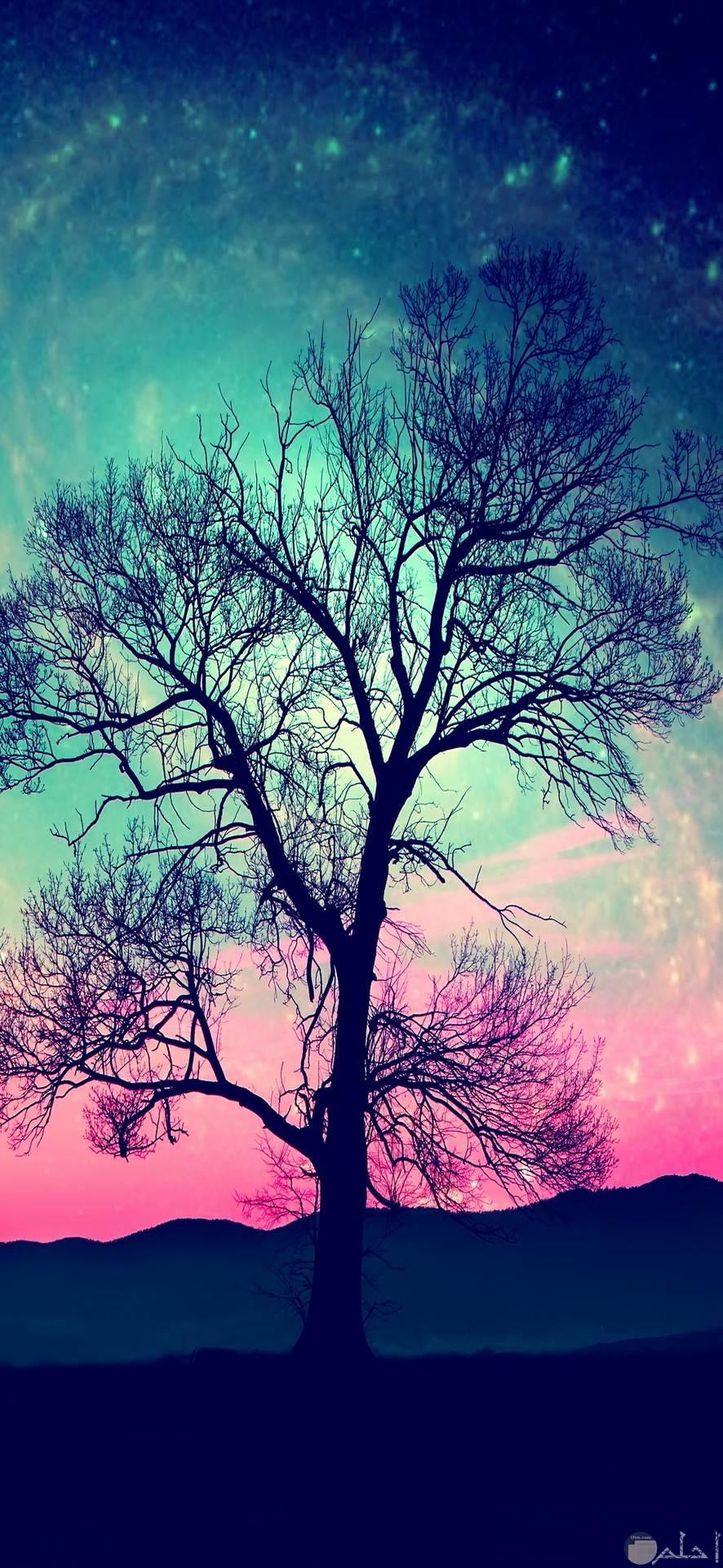 اجمل صور اشجار