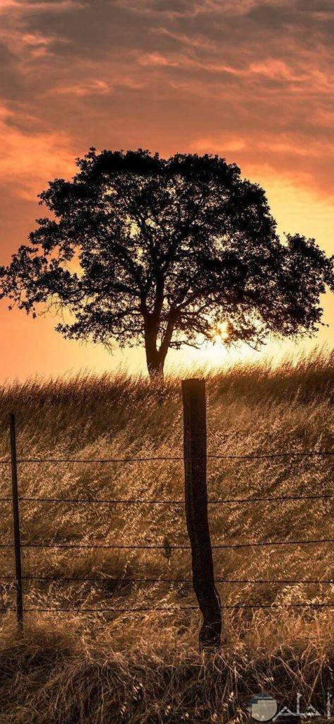 صور أشجار جذابة