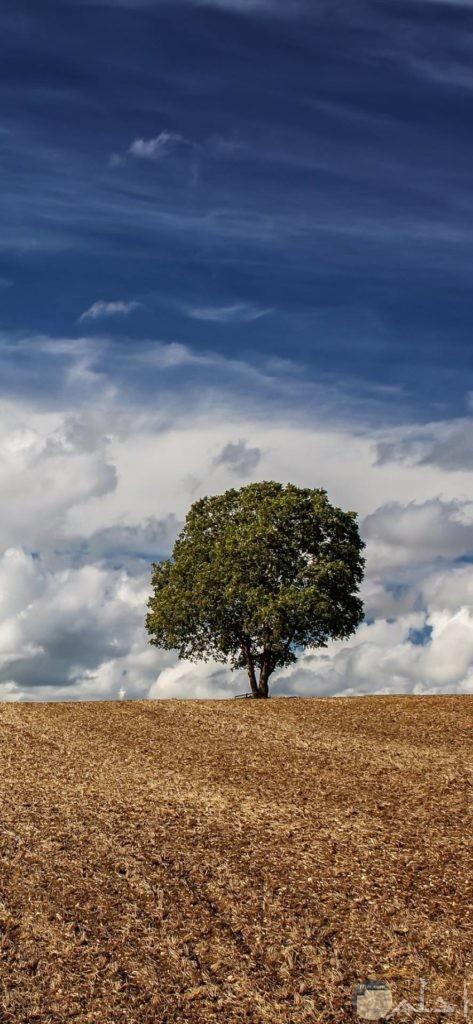صور أشجار مميزة