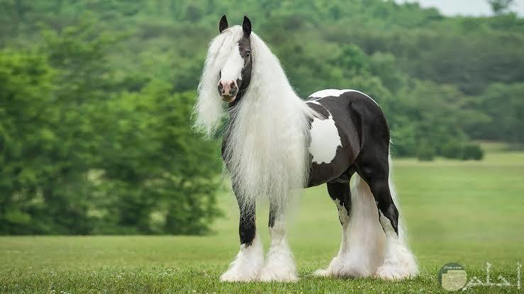 أجمل صور خيول روعة