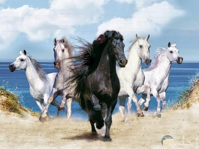 أجمل صور خيول مميزة