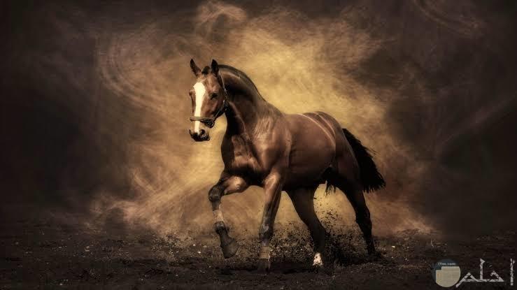 أجمل صور خيول جذابة