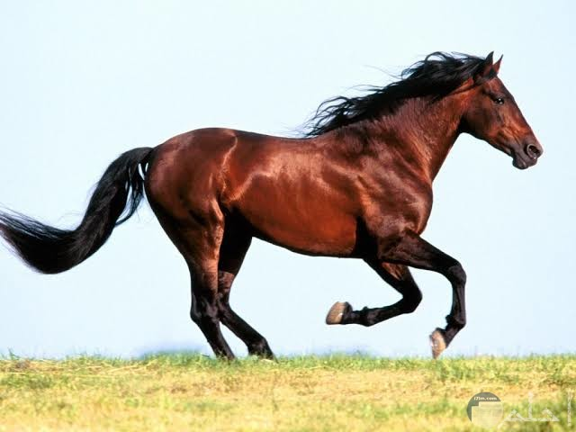 صور خيول مدهشة