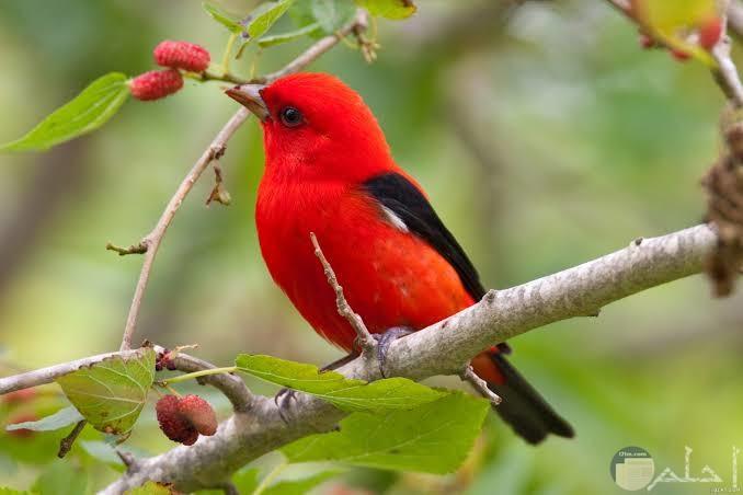 أجمل صور عصافير رائعة