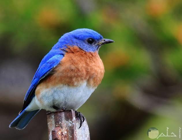أجمل صور عصافير