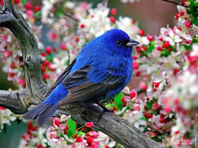صور عصافير مميزة