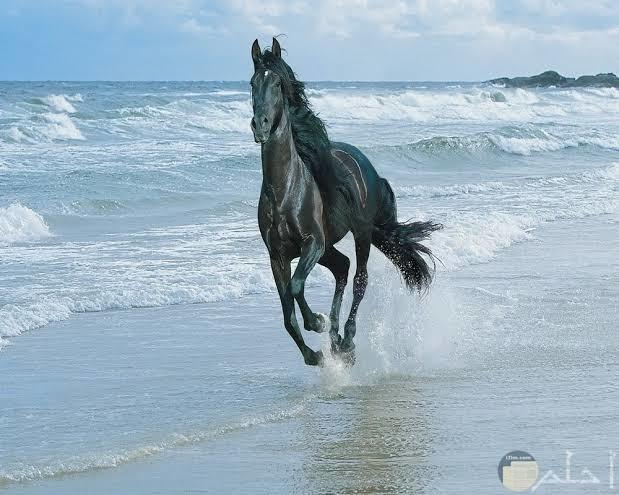 صور خيول روعة