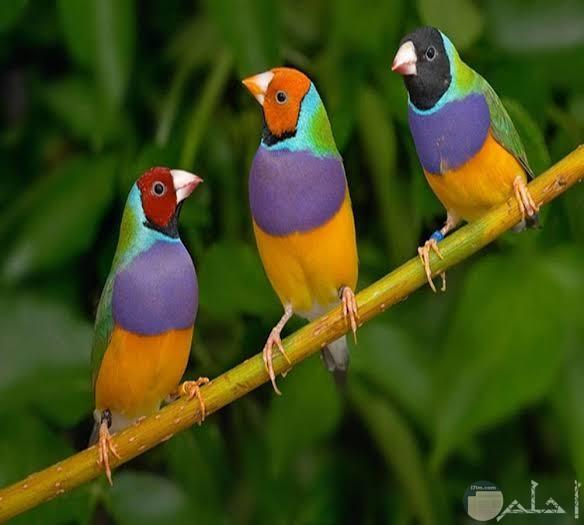 صور عصافير تجنن