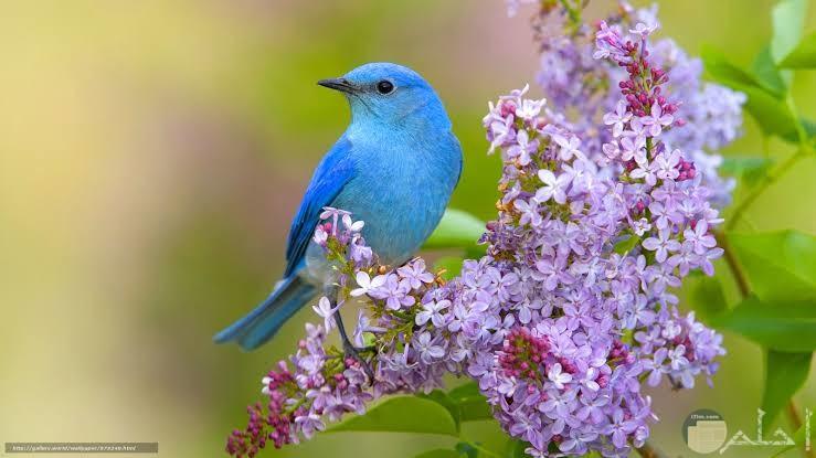 صور عصافير رائعة