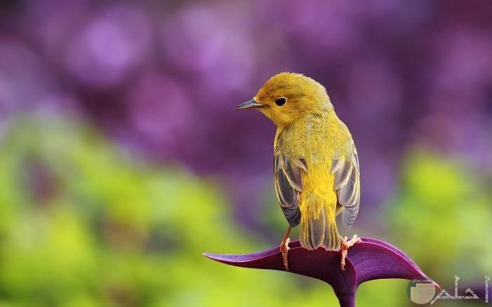صور عصافير جميلة