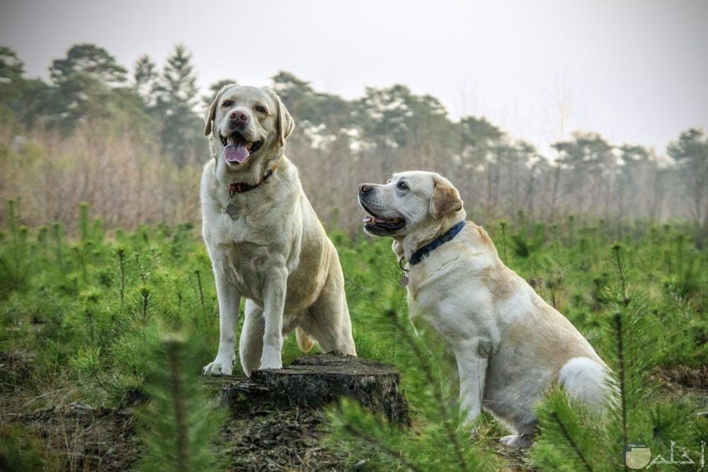 صور كلاب تجنن