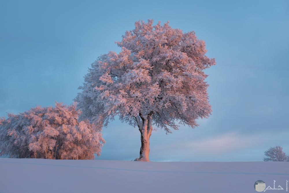 صور أشجار رائعة