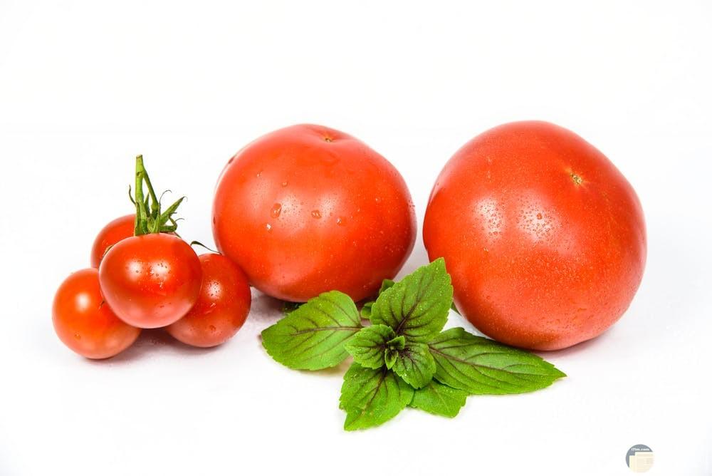 أجمل صور طماطم