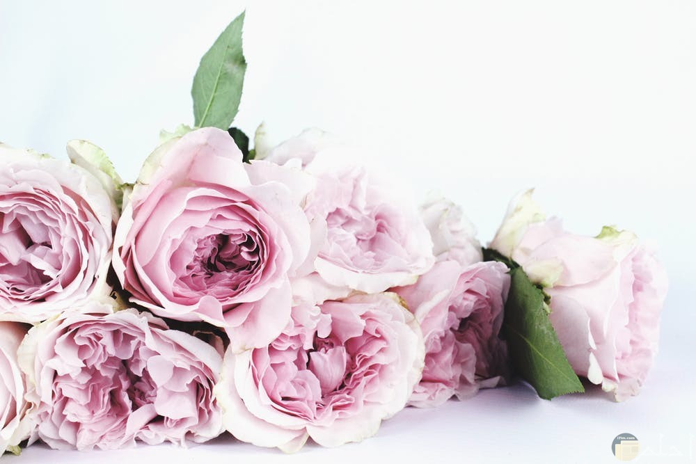 صور زهور تجنن