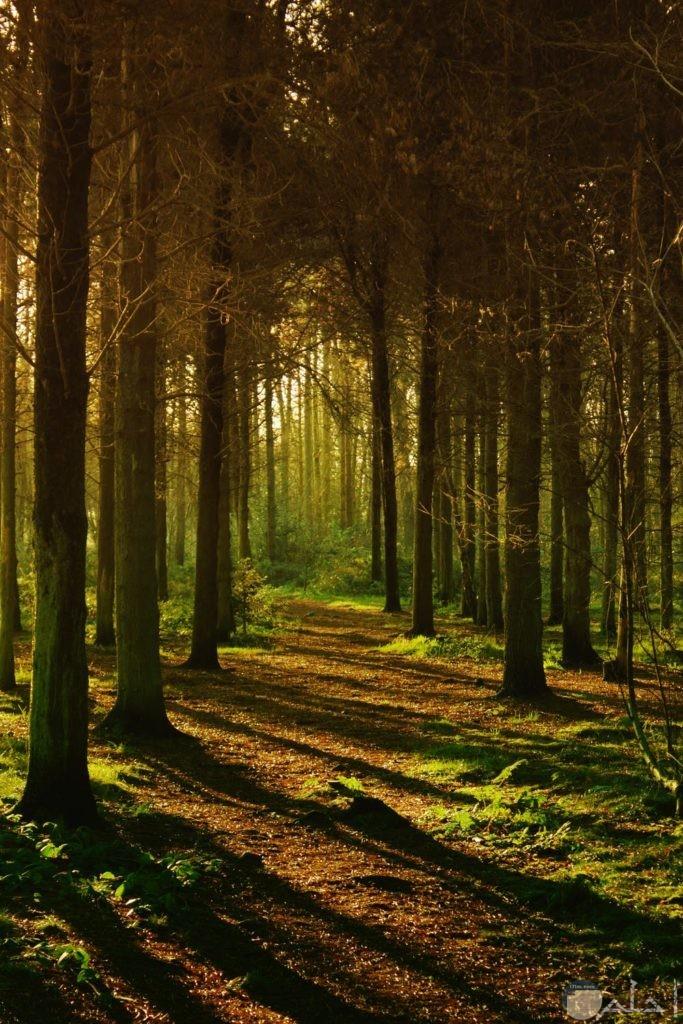 صور أشجار جميلة