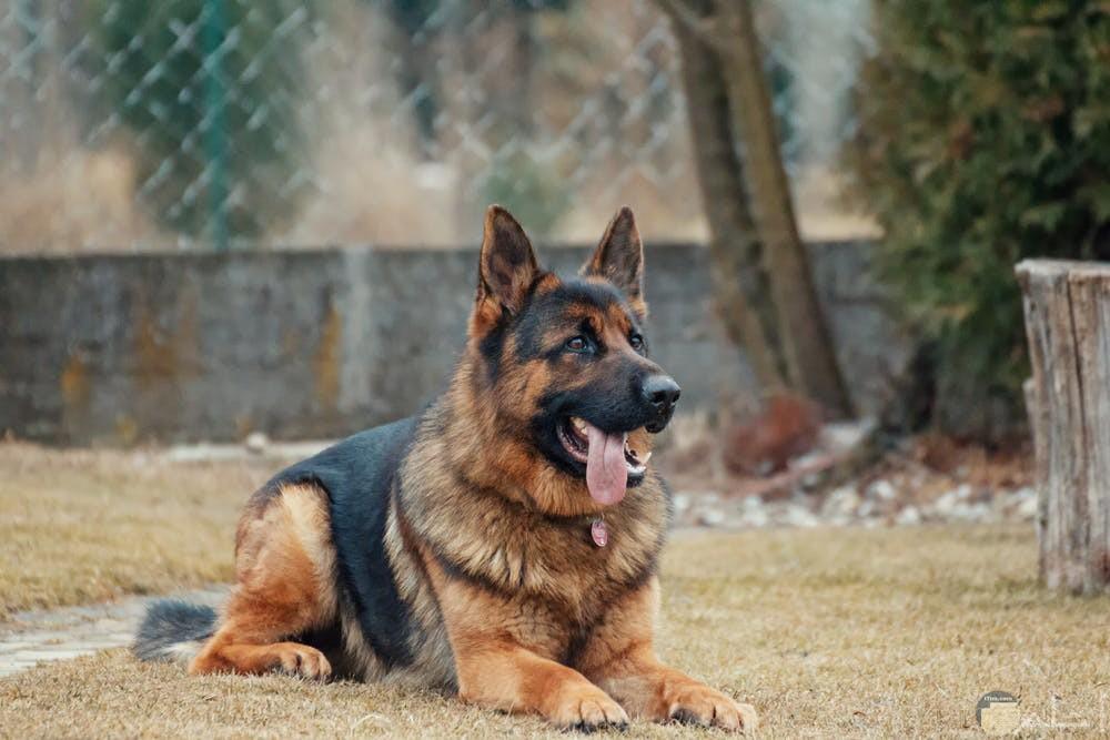 صور كلاب تحفة