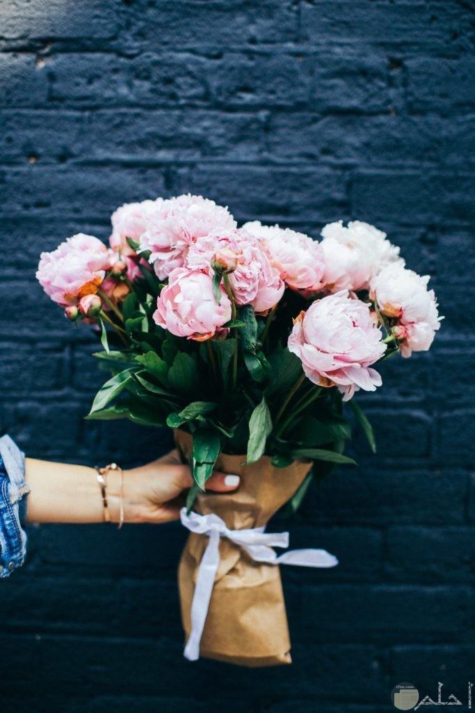أجمل صور زهور