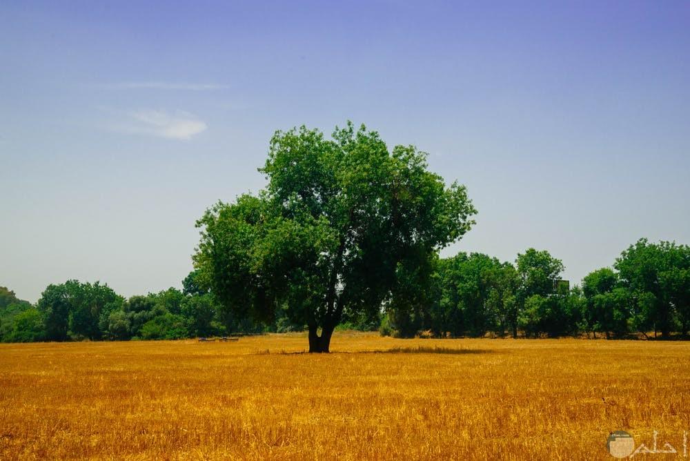 أجمل صور أشجار